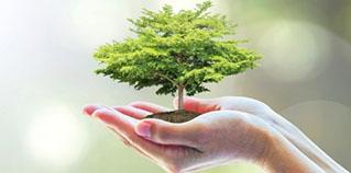 Israel: Tìm ra cách sử dụng thảm thực vật thành năng lượng điện